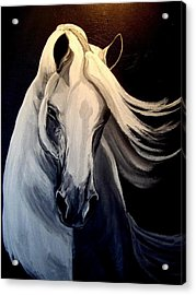 Andalusian Stallion Acrylic Print by Glenda Smith