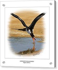 Andrews Frigatebird Fregata Andrewsi 4 Acrylic Print by Owen Bell