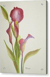 Andy's Calla Lillies Acrylic Print by Marsha Elliott
