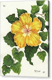 Andys Hibiscus Acrylic Print