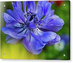 Anemone Blue Acrylic Print