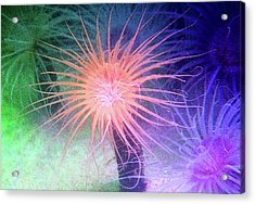 Acrylic Print featuring the photograph Anemone Color by Anthony Jones