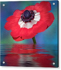 Acrylic Print featuring the photograph Anemone Flower by Susan Candelario