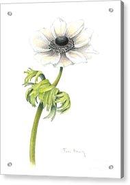 Anemone Acrylic Print by Fran Henig