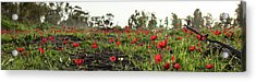 Acrylic Print featuring the photograph Anemones Forest Panorama by Yoel Koskas