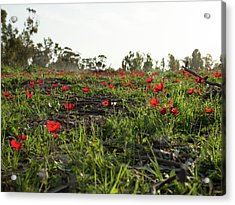 Acrylic Print featuring the photograph Anemones Forest by Yoel Koskas