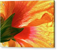 Acrylic Print featuring the photograph Angel Brushstrokes  by Marie Hicks