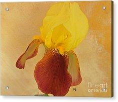 Acrylic Print featuring the photograph Angel Iris by Marsha Heiken