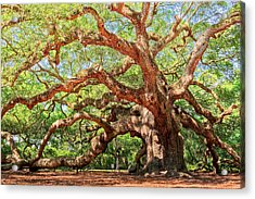 Angel Oak - Charleston Sc  Acrylic Print