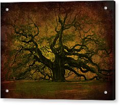 Angel Oak 3 Charleston Acrylic Print