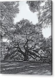 Angel Oak Acrylic Print by Dave Stegmeir
