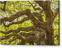 Acrylic Print featuring the photograph Angel Oak I by Steven Ainsworth