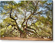 Angel Oak In Spring Acrylic Print