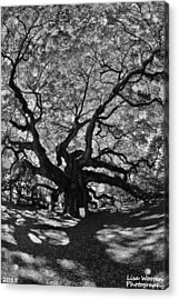 Acrylic Print featuring the photograph Angel Oak Johns Island Black And White by Lisa Wooten