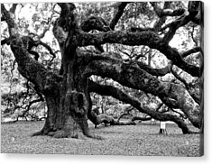 Angel Oak Tree 2009 Black And White Acrylic Print by Louis Dallara
