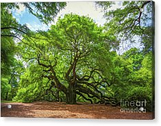 Angel Oak Tree In South Carolina  Acrylic Print
