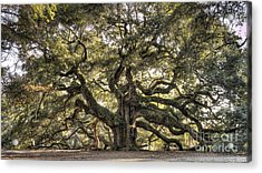 Angel Oak Tree Live Oak  Acrylic Print