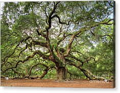 Angel Oak Tree Of Life Acrylic Print