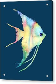 Angelfish I - Solid Background Acrylic Print by Hailey E Herrera