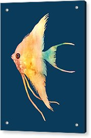 Angelfish II - Solid Background Acrylic Print by Hailey E Herrera