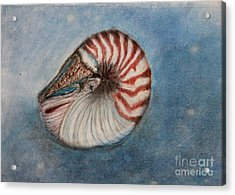 Acrylic Print featuring the painting Angel's Seashell  by Kim Nelson