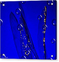 Angels Wings Blue Acrylic Print