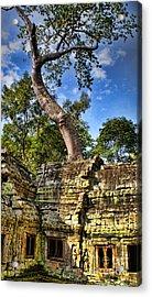 Angkor Wat And Tree Acrylic Print by Louise Fahy