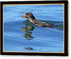 Angry Bird Acrylic Print by BYETPhotography