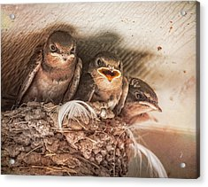 Angry Birds Acrylic Print