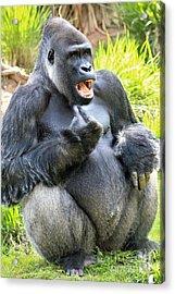 Angry Gorilla Acrylic Print by Paulette Thomas