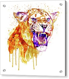 Angry Lioness Acrylic Print