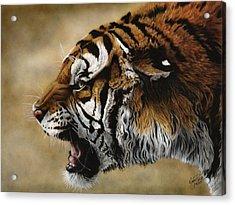 Angry Siberian Acrylic Print