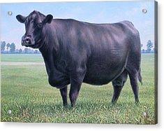 Angus Cow 981 2007 Acrylic Print by Hans Droog