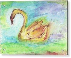 Angus Og Acrylic Print by A L Aronson