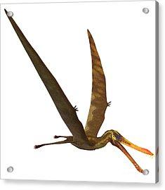 Anhanguera Pterosaur Acrylic Print by Corey Ford