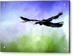 Anhinga In Flight Acrylic Print by Cyndy Doty