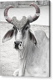 Animal Royalty 6 Acrylic Print by Sumit Mehndiratta