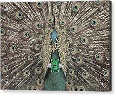 Animal Royalty 8 Acrylic Print