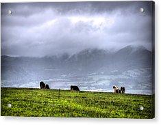 Animals Livestock-03 Acrylic Print