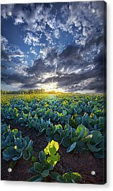Ankle High In July Acrylic Print