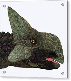 Ankylosaurus Dinosaur Head Acrylic Print