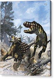 Ankylosaurus Hits Tyrannosaurus Rex Acrylic Print