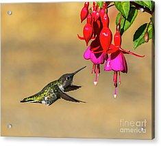 Anna And Hardy Fuchsia Flower Acrylic Print