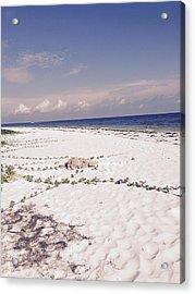 Anna Maria Island Beyond The White Sand Acrylic Print by Jean Marie Maggi