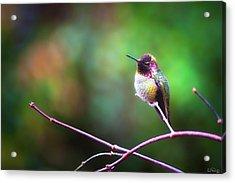 Anna's Hummingbird I Acrylic Print