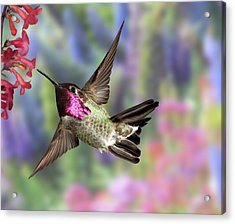 Annas Pastel Background Acrylic Print by Gregory Scott