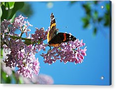 Annie's Butterfly Acrylic Print