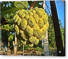 Annona Fruit Found In Thailand Acrylic Print by Wichit Phaephun