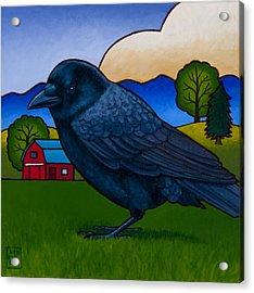 Anns Crow Acrylic Print