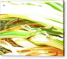 Acrylic Print featuring the photograph Anole Sunning by Jeanne Kay Juhos